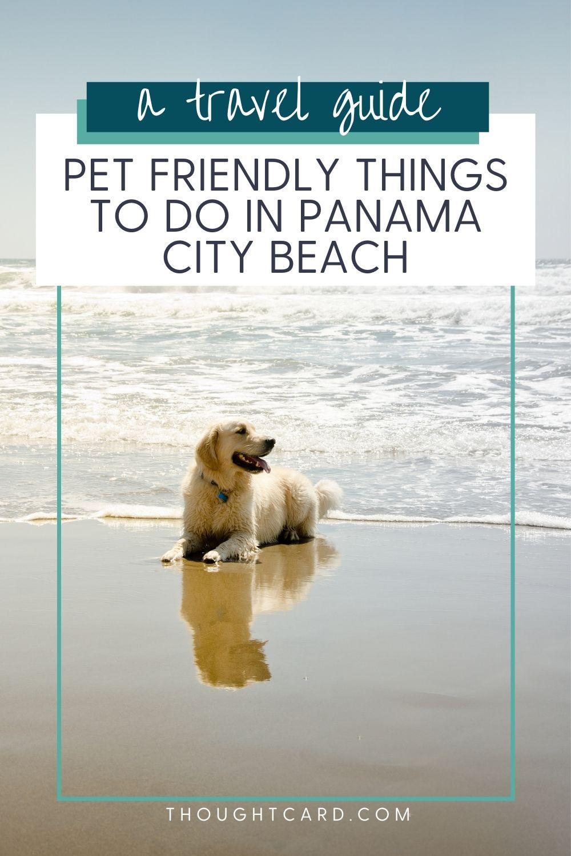 Panama City Pet Friendly Things to Do